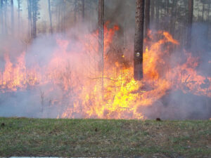 Wind whips the blaze along Hwy. 33 in the county's remote northern section.