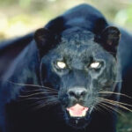 ' Prowlers of Pamlico County ' exist