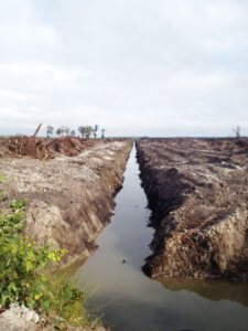 This ditch in the Atlas Tract has recently been cleared of trees. Originally dug in the late 1980s, the ditch was an apparent violation of the 'Swampbuster' provision of the Food Security Act of 1985, passed to discourage the conversion of wetlands to agricultural production. Bulldozers in the Atlas Tract have been used to remove stumps of trees recently cut. Hundreds of deer, bear, turkeys and thousands of small mammals and songbirds are permanently displaced.