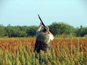 NEWS1-Dove-Hunting-pic