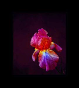 NEWS1-Mona-Kay-winner-pic-of-Iris