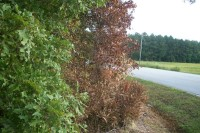 NEWS1-Chemical-burning-Dead-tree-pic