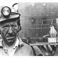 'I am the canary  in the coal mine!'