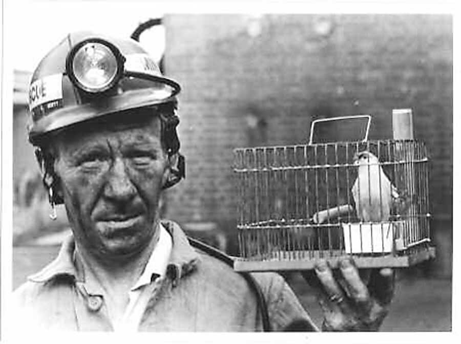 Image result for canary in the coal mine